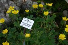 Botanischer Garten Bad Schandau